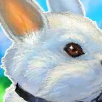 My Dear Rabbit