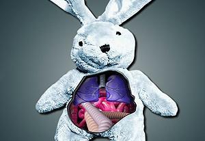 Rabbit Surgery
