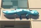 Gecko Dive